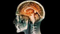 Yapay insan beyni üretildi!